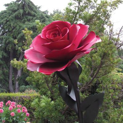 modern roses 8