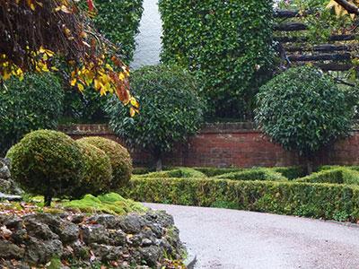 top-topiary-1