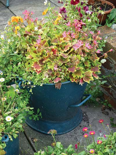 watering-can-pot